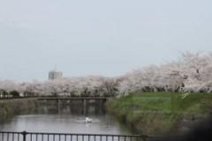 5月8日(火)お花見ドライブ 122