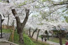 5月8日(火)お花見ドライブ 067