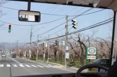 H25.5.9(木)花見ドライブ①
