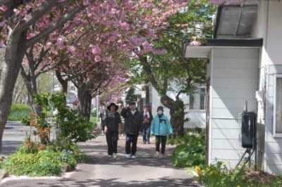 平成27年5月14日(木) 花見散歩